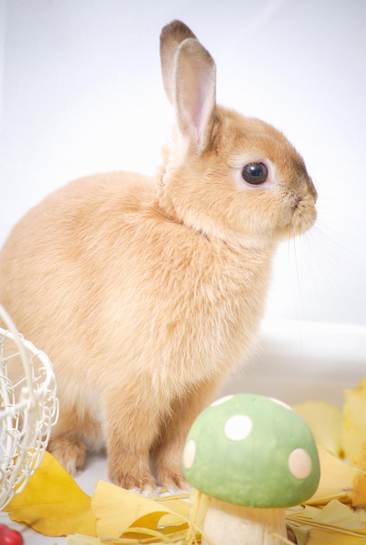 P Rolence Rabbits can rabbits eat cabbag...