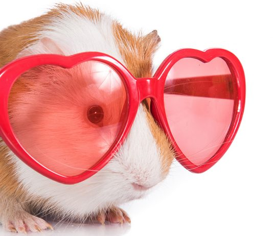cool guinea pig names