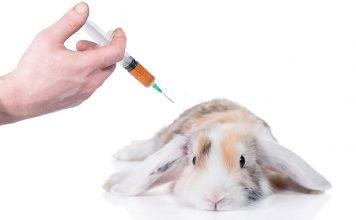 do rabbits need shots