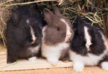 rabbit nesting box