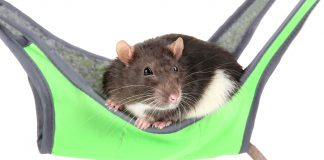 rat hammocks