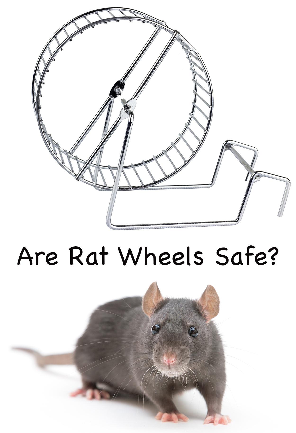 rat wheels