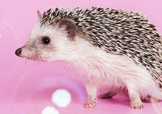 hedgehog with bubbles