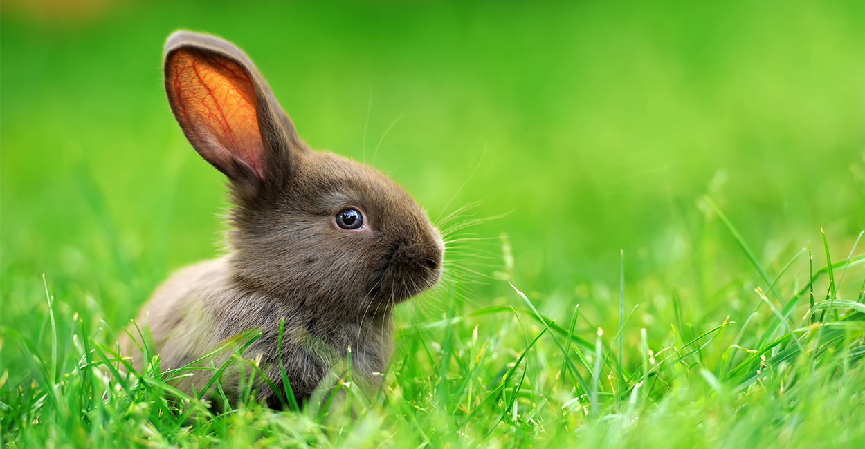 best pets for kids - rabbit