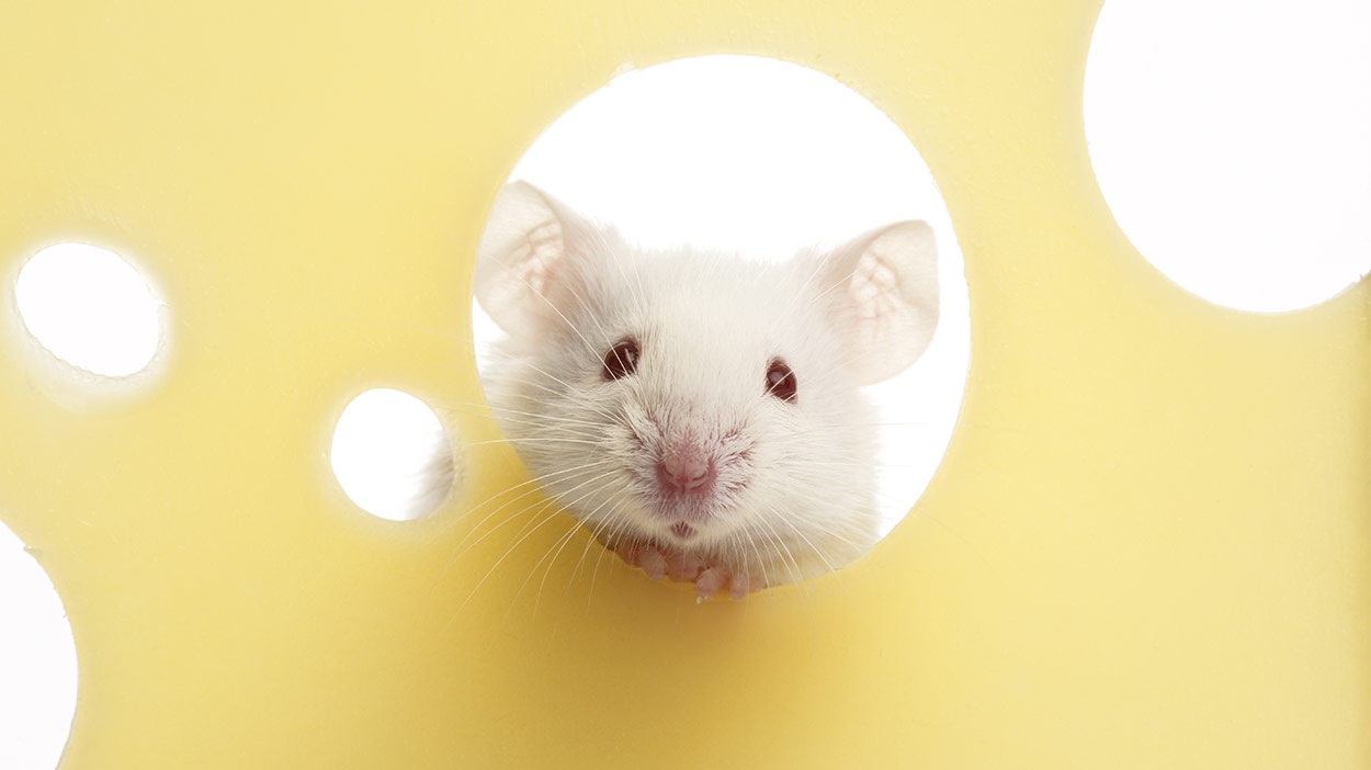 best pets for kids mice