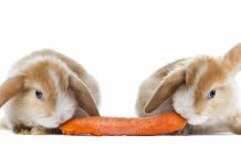 rabbit safe foods