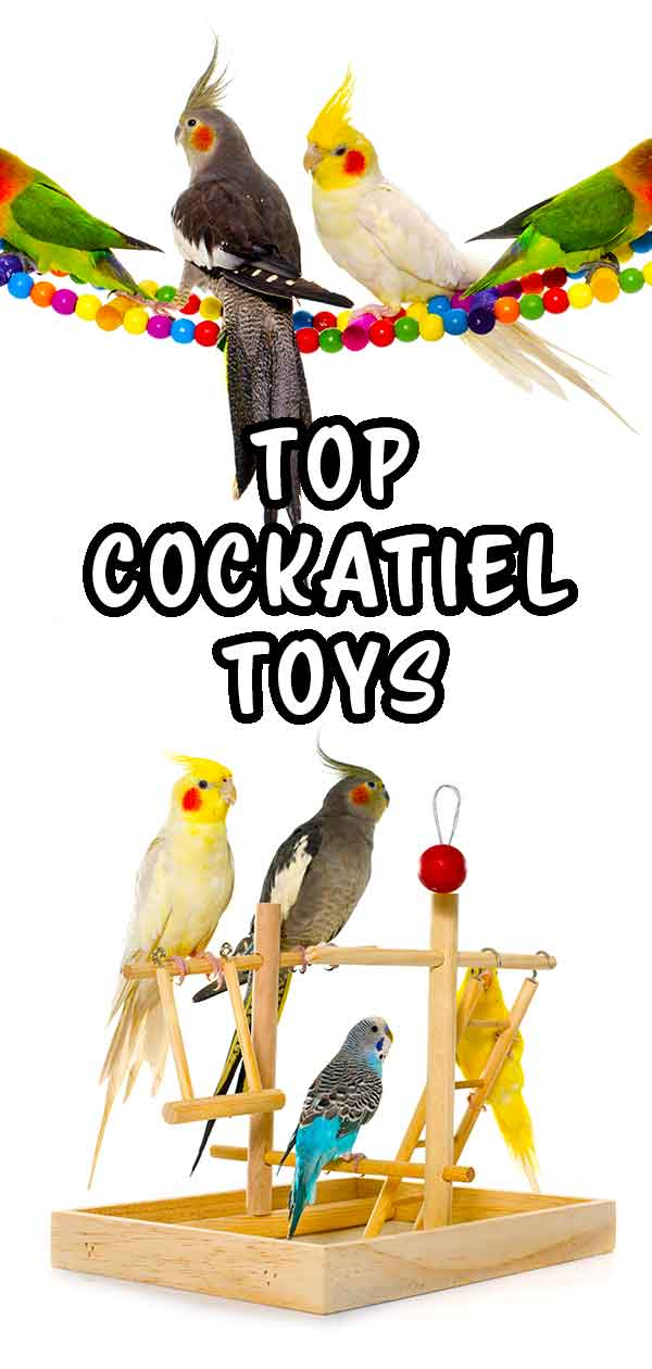 Check out our list of favorite cockatiel toys!