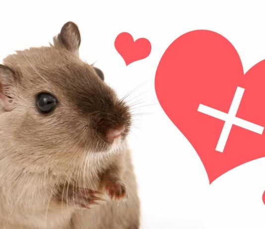 gerbil care