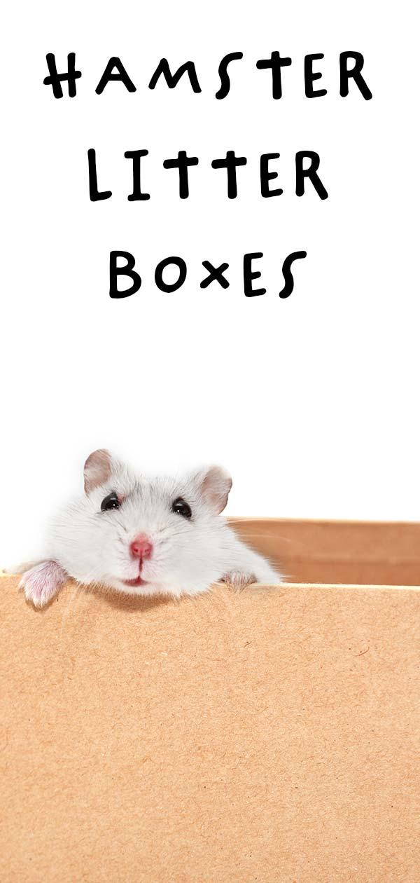 hamster litter box