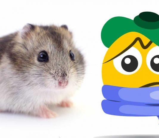 sick hamster