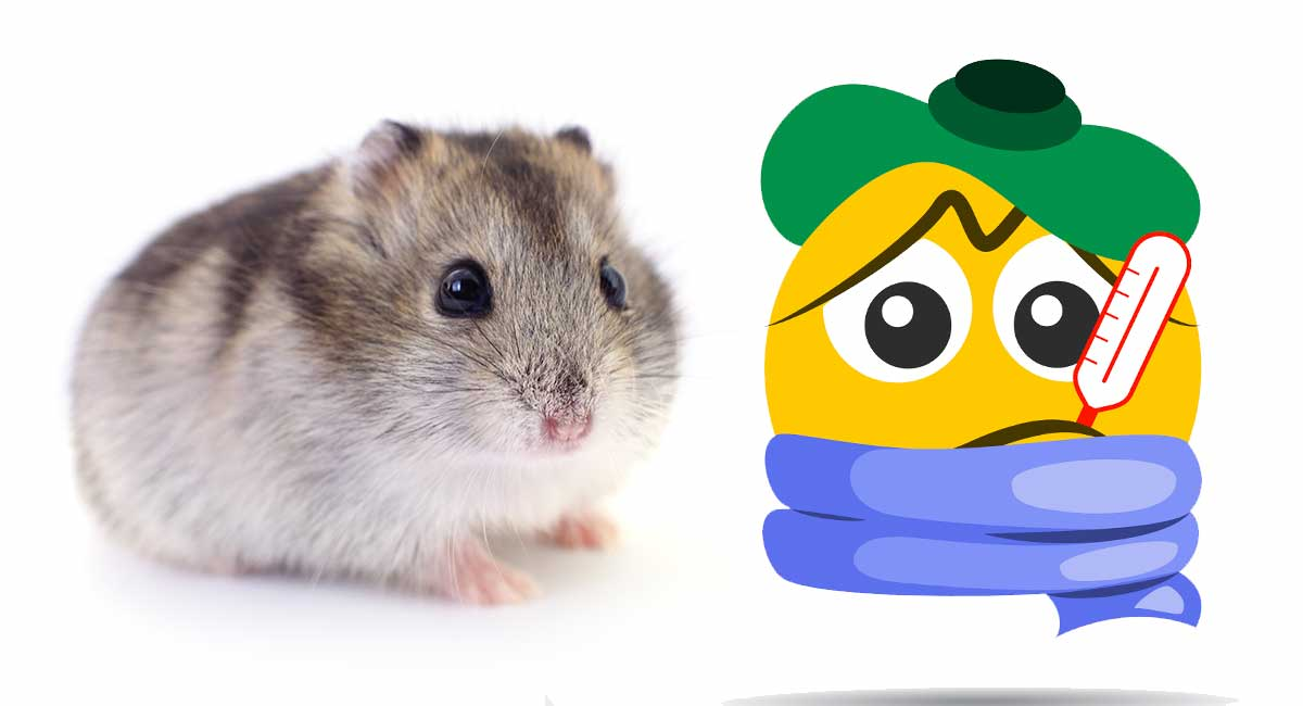 Sick Hamster - Hamster Ilnesses and Diseases
