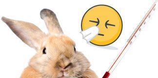 sick rabbit