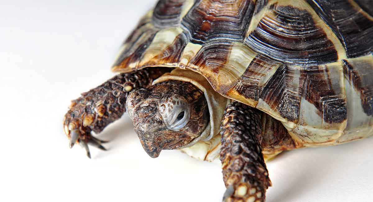 Sick Turtle - Does My Tortoise Need A Vet?