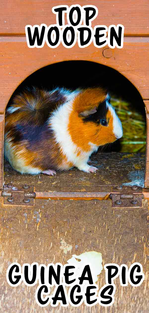 Looking for a wooden guinea pig cage?