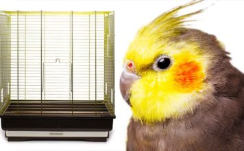 best cage for cockatiel