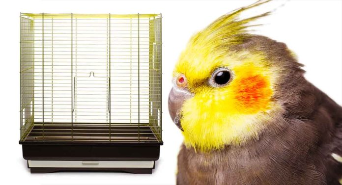 best cage for cockatiel