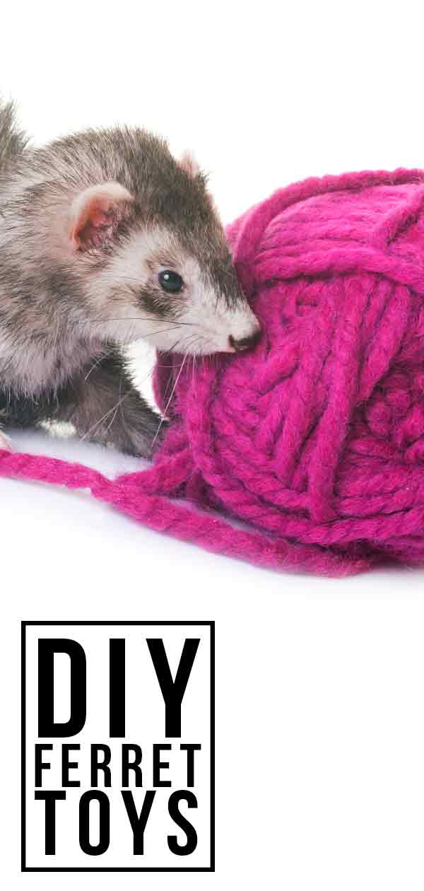 Homemade DIY ferret toy ideas