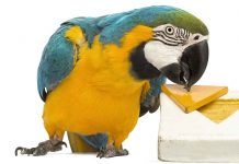 DIY parrot toys ideas
