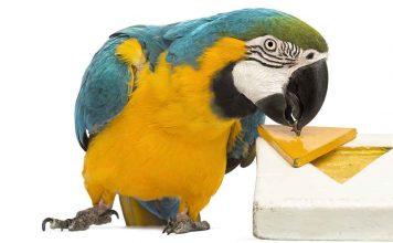 DIY parrot toys ideas
