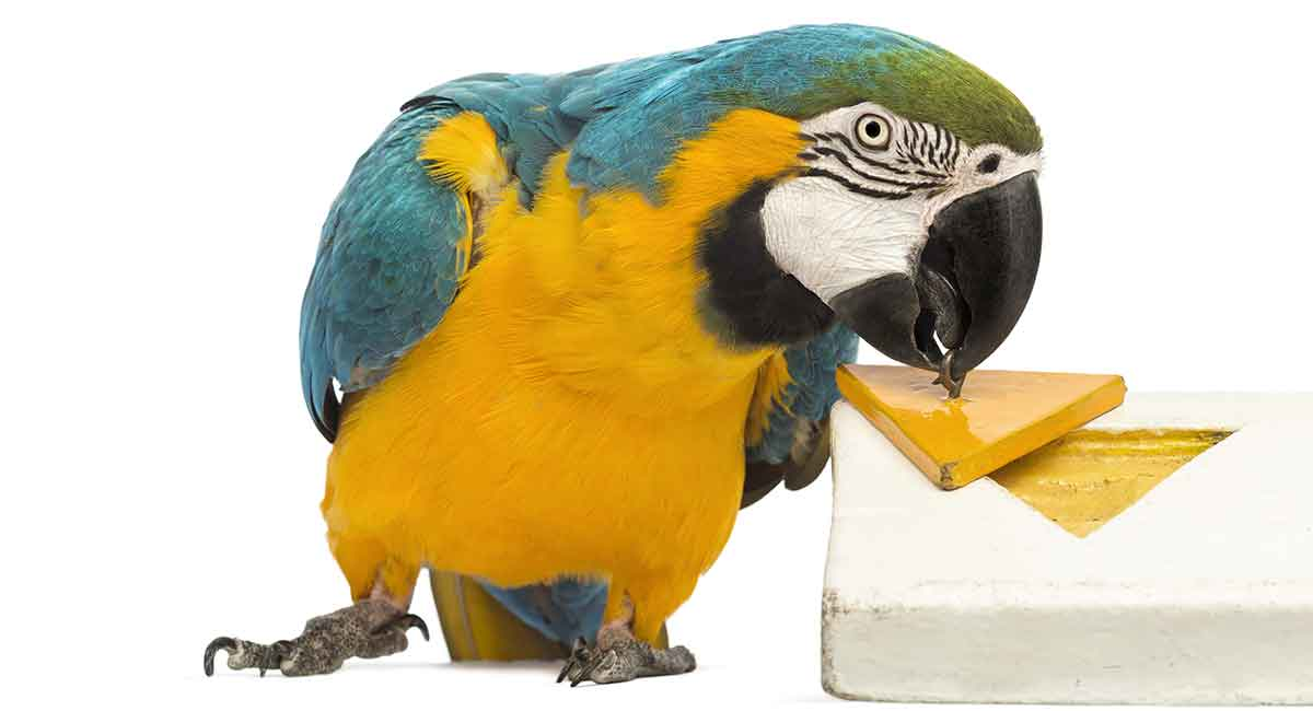 Diy Parrot Toys Simple Fun And Easy To Make Ideas