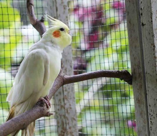 cockatiel cage