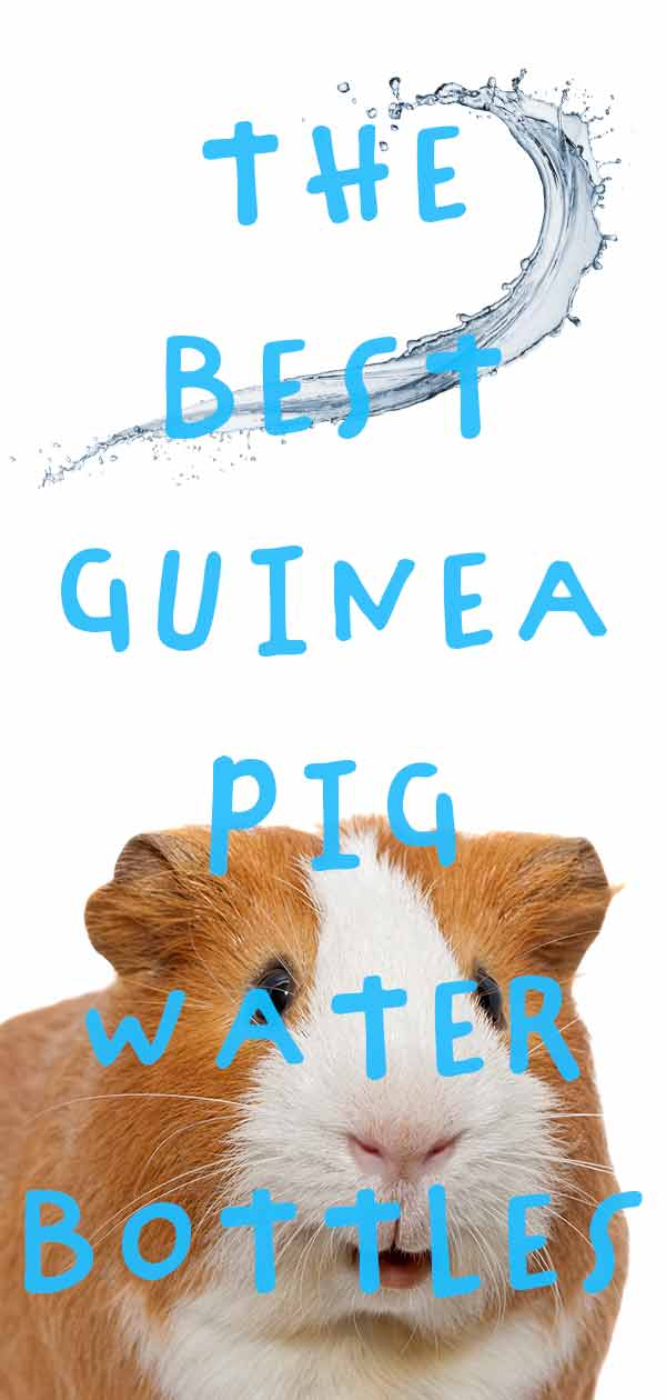 Best Guinea Pig Water Bottle - Stop The Leaks And Beat The Frost