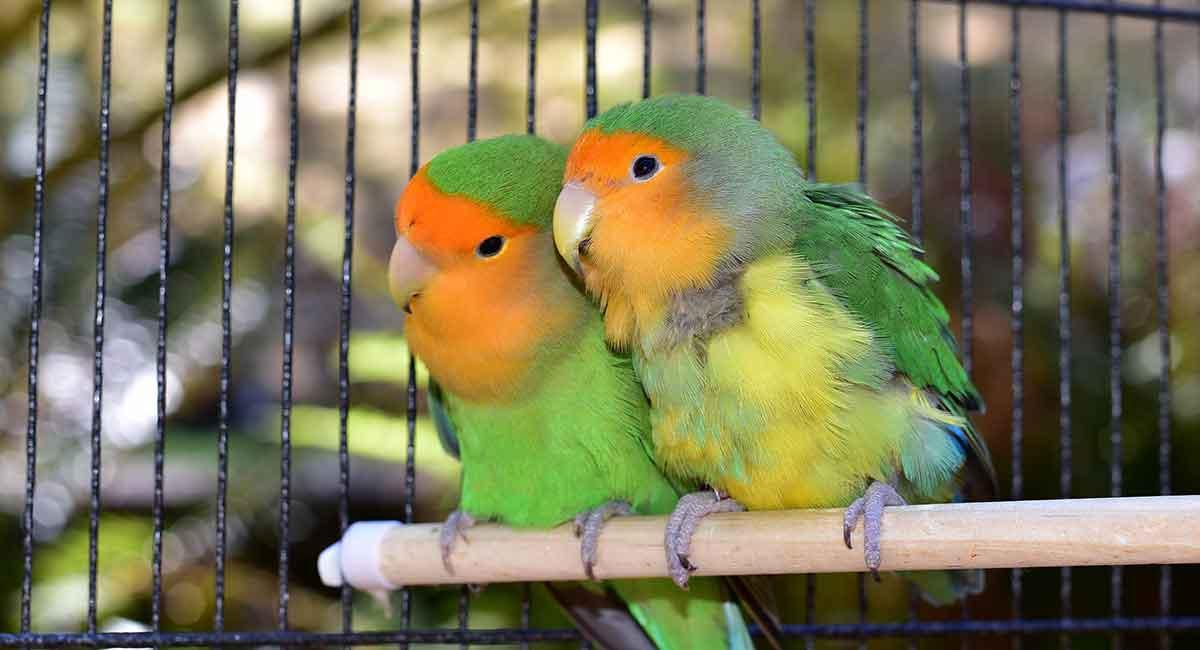 the lovebirds - photo #26