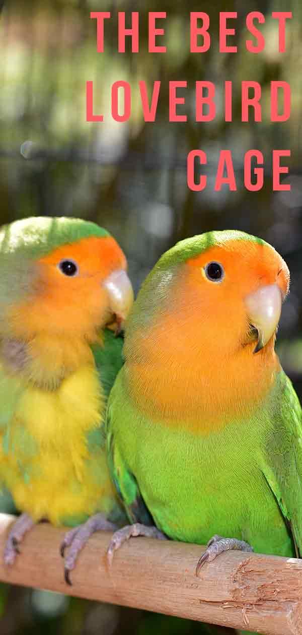 best lovebird cage
