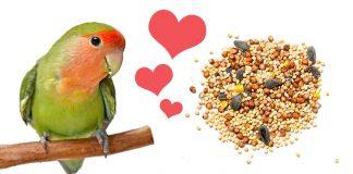 what do lovebirds eat
