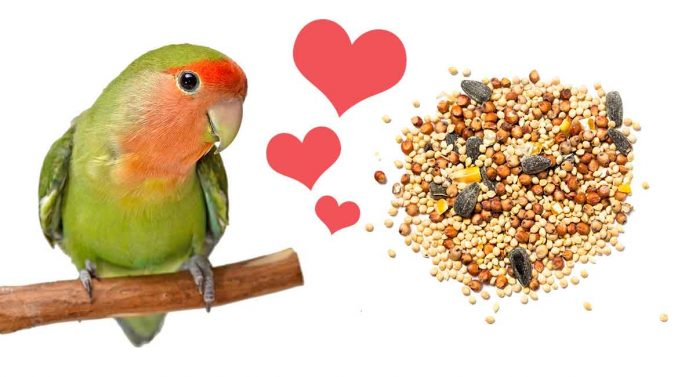 what do lovebirds eat