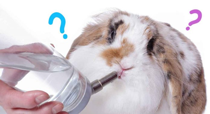 what are the best rabbit water bottles?