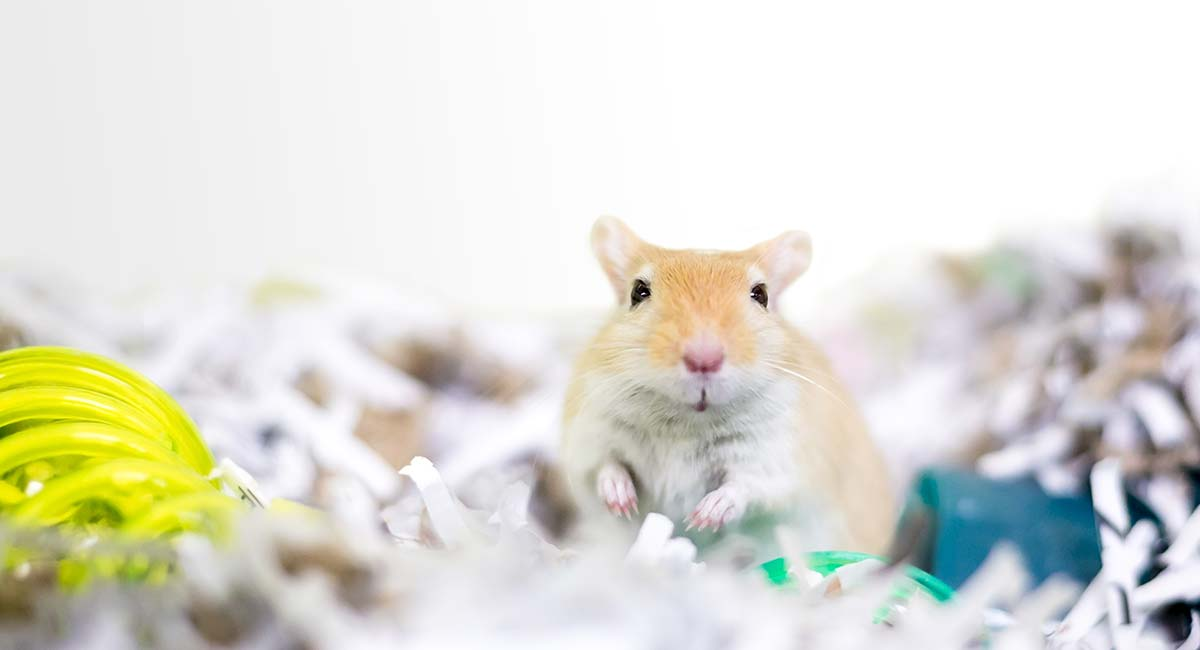 Best Gerbil Bedding For Keeping Them Comfy And Cozy