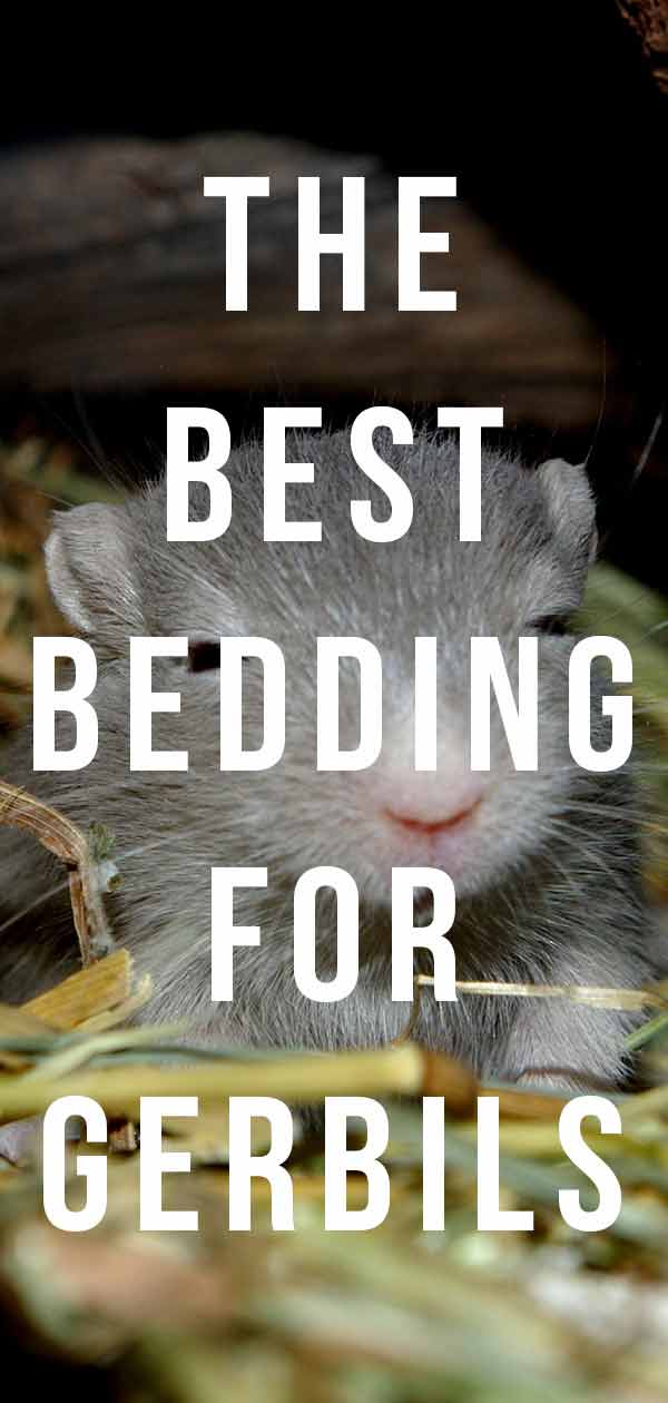 best gerbil bedding