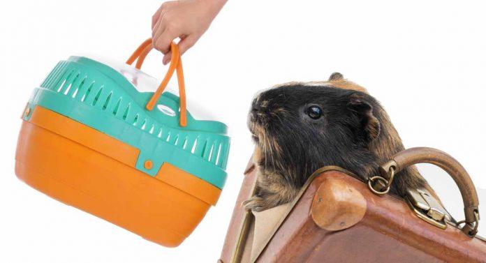 guinea pig carrier