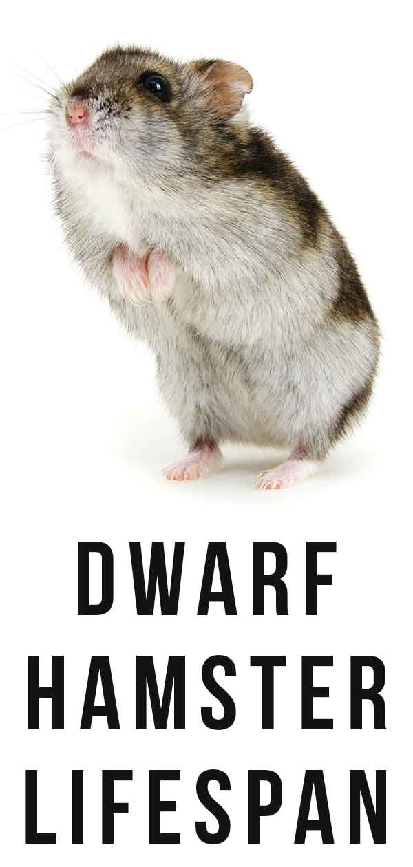Hamster Lifespan Images - Reverse Search