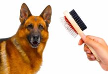 best dog brush for german shepherd
