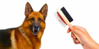 best dog brush for german shepherd