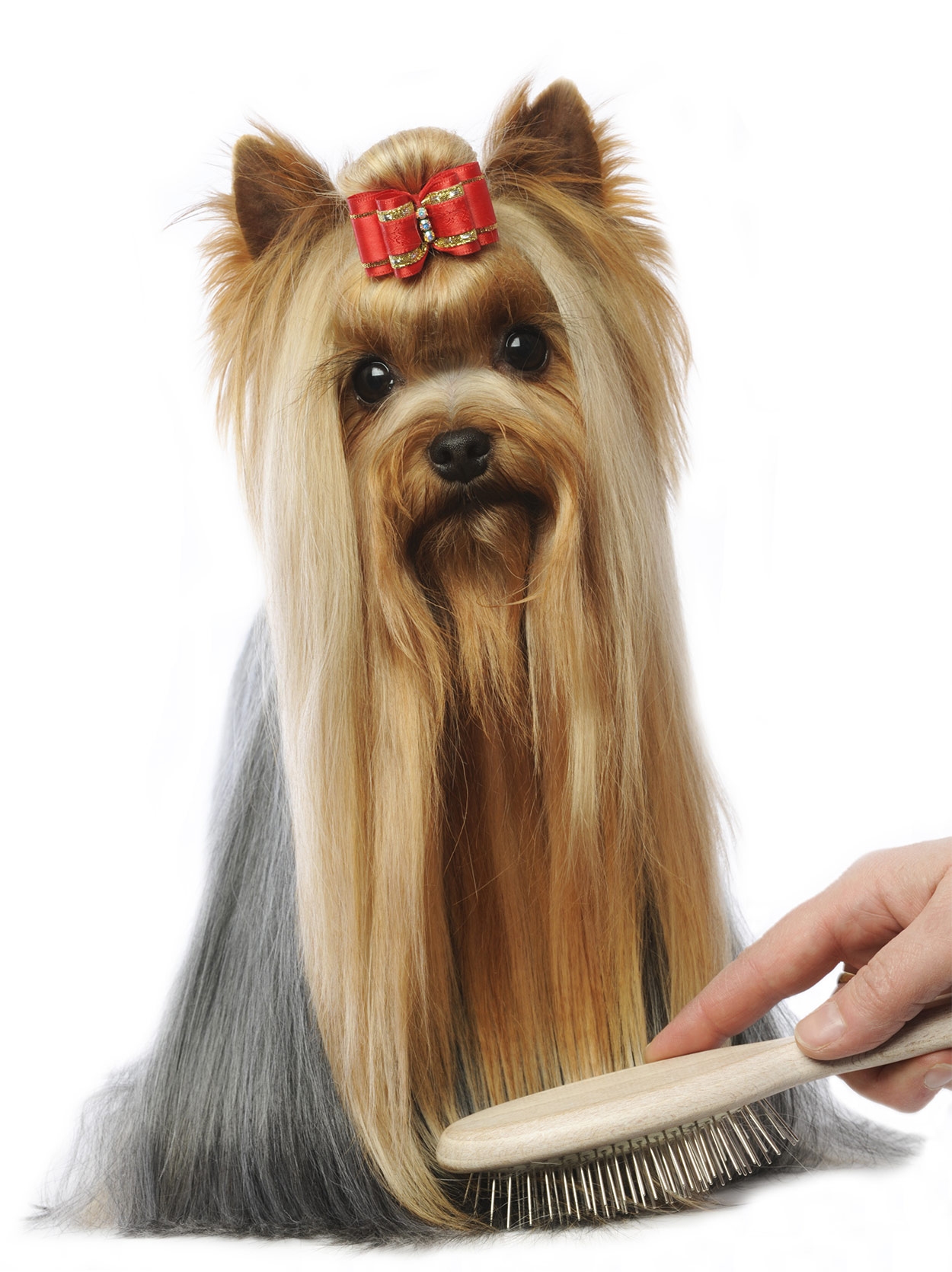 best brush for yorkies