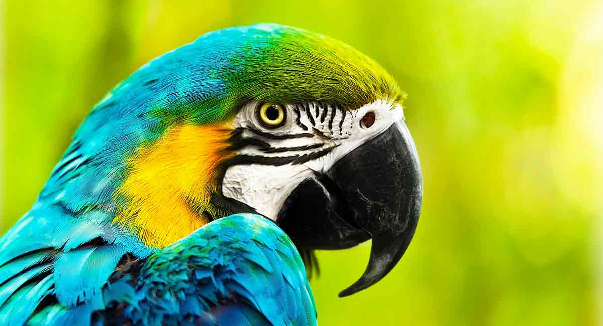 Parrot Names 300 Ideas From Macaws To African Greys