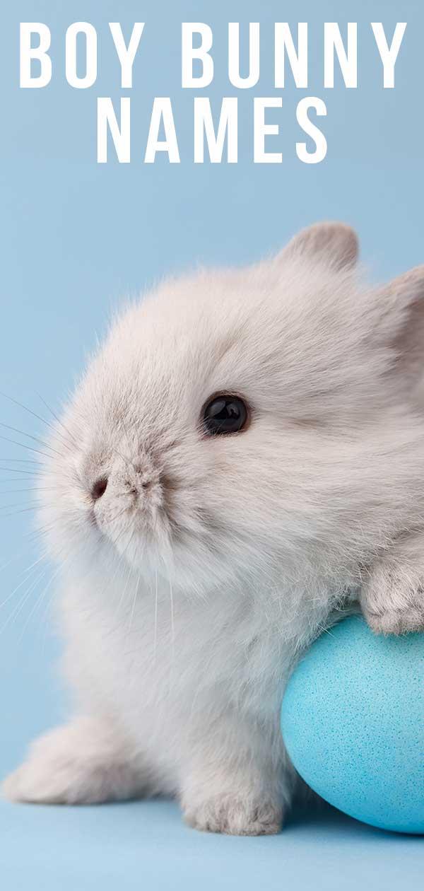 boy bunny names