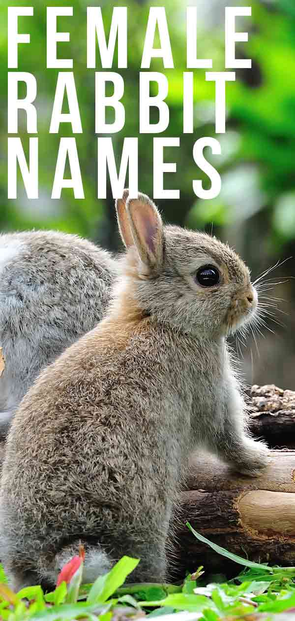 female rabbit names