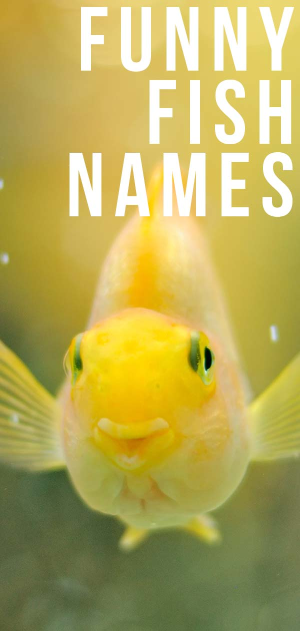 Funny Fish Names - 350 Hilarious Ideas For Naming Your Fish