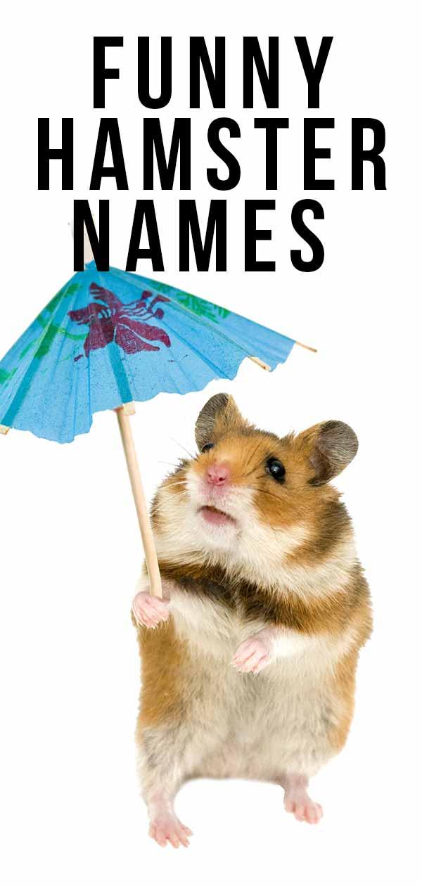 funny hamster names