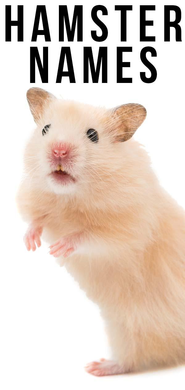hamster names