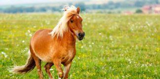 pony names