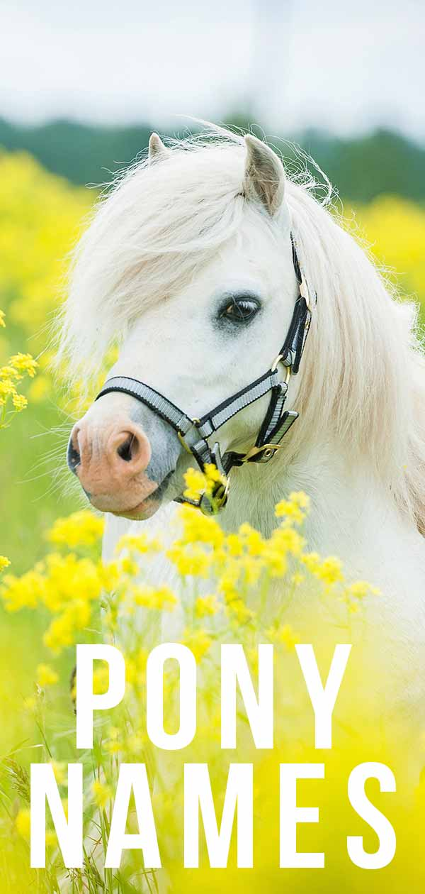 Pony Names 360 Amazing Ideas For Naming Your Little Horse