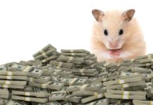 how much do hamsters cost