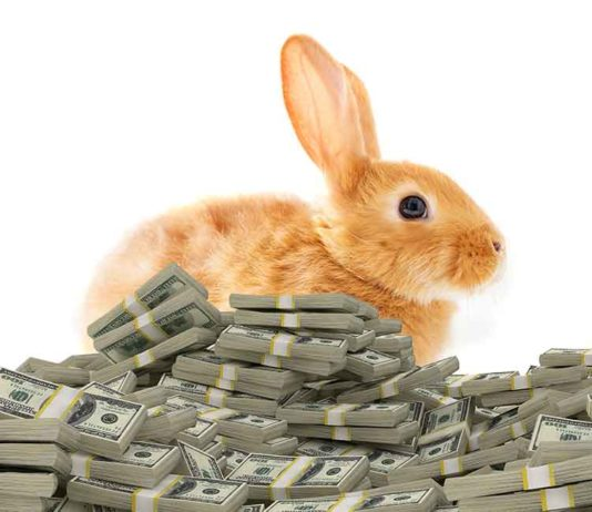 how much do rabbits cost