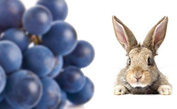 Can Rabbits Eat Grapes