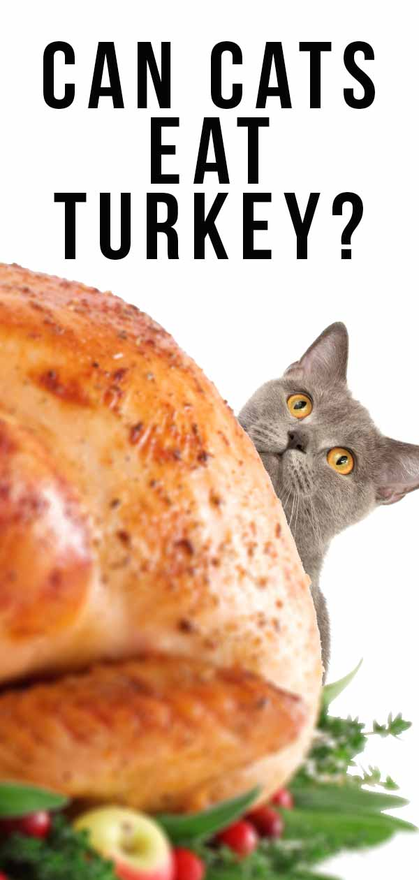 can cats eat turkey